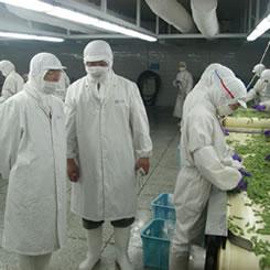 中国の協力工場